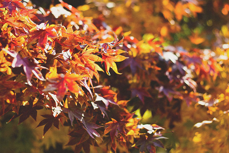 Fall Thoughts The Best Season For Outdoor Living